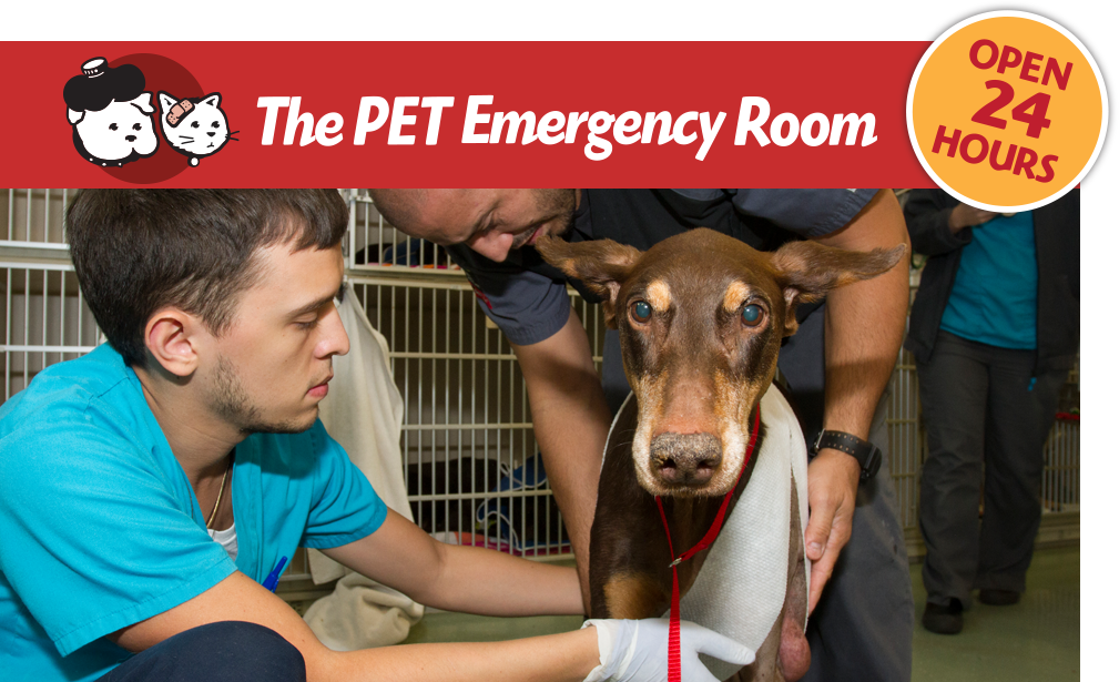 Pet Emergency Room Miami