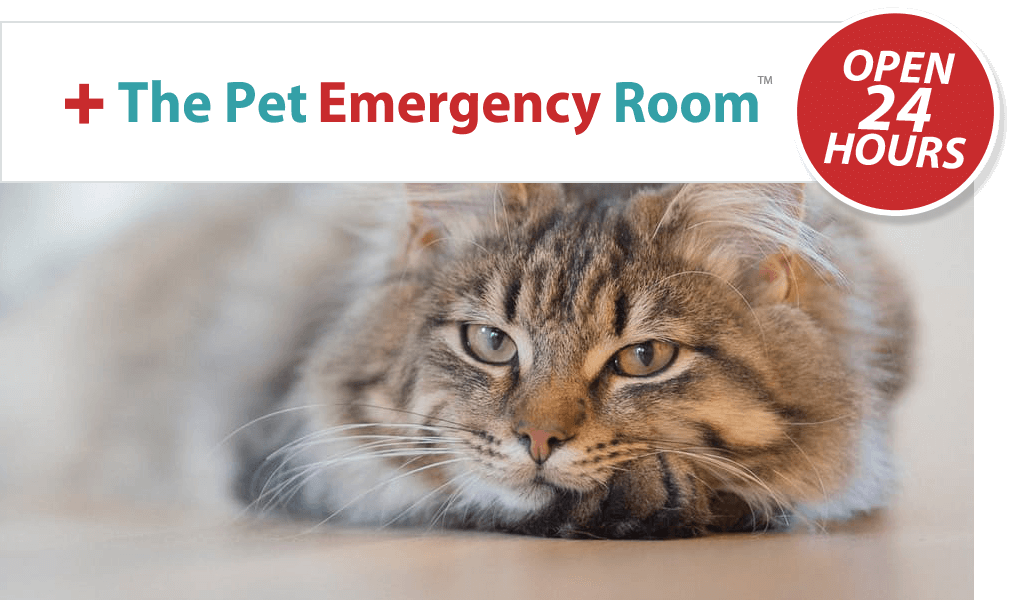 Pet Hospitalization Instructions Miami Pet Emergency Room