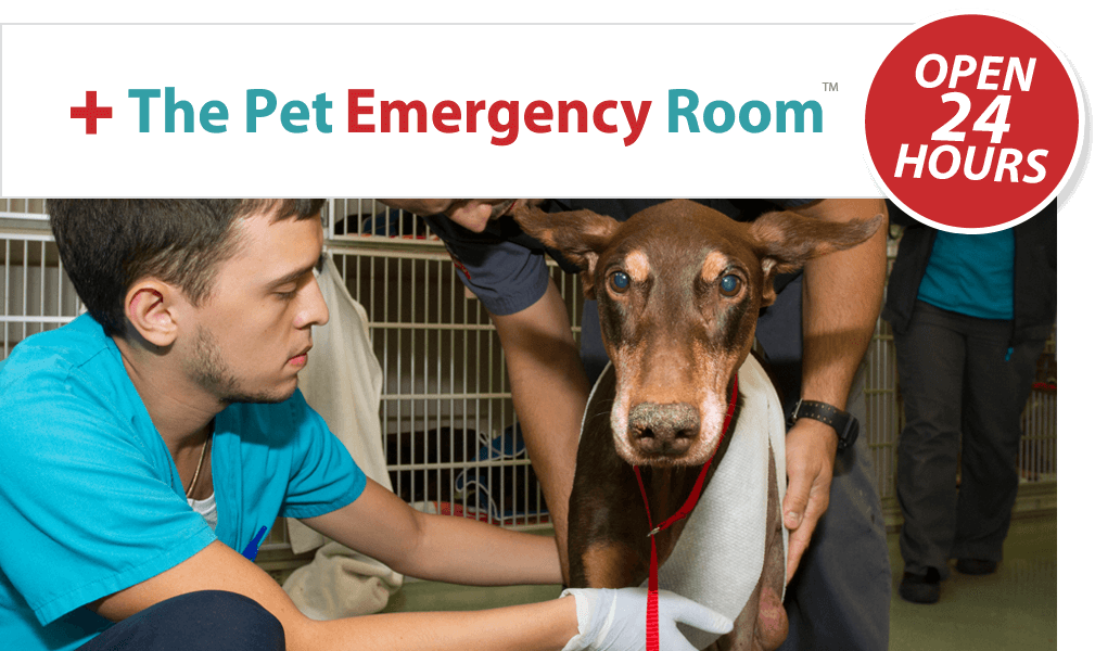 Pet Emergency Room - Miami - 24/7 ER Service